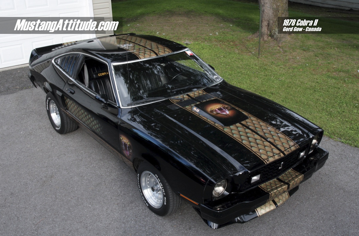 Attitude of the Month - Black 1978 Cobra Mustang